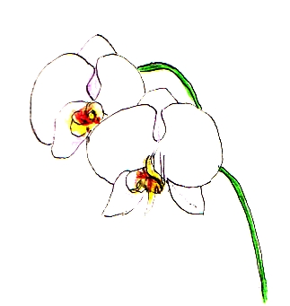 Picture Orchid Flower on Took A Few Pictures To Use For Drawing And Made These Drawings In My