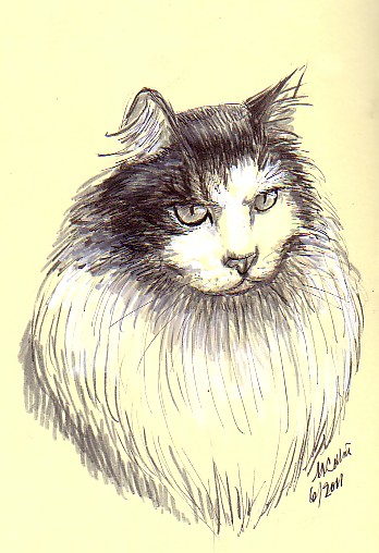 cat drawing-pen and gouache on pater