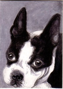 boston-terrier-drawing-by-mellanie-collins
