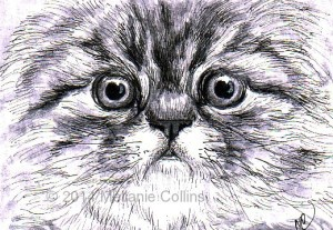 Kitten - Artist-Trading-Card-drawing-by- Mellanie Collins