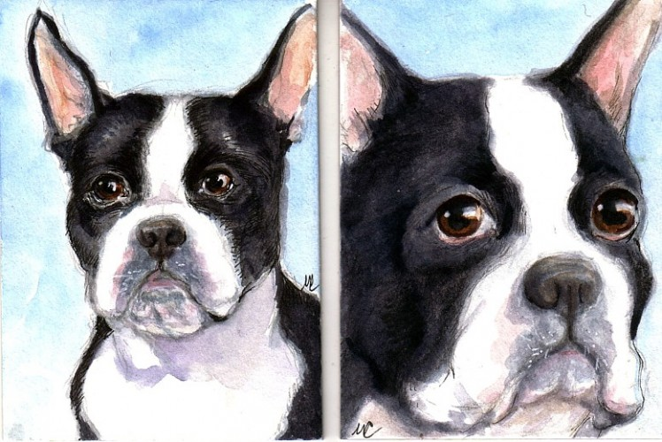 """Joy's Boston Terriers 2.5"""" x 3.5"""" ink and watercolor on Illustration board"""