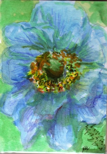 blue-poppy-drawing